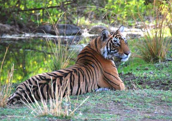 Ranthambore two nights package