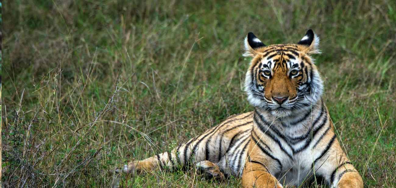Ranthambore Car Hire