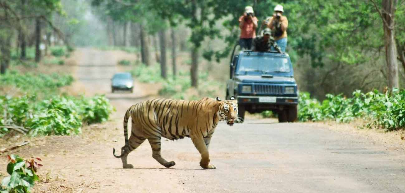Car Rental Ranthambore